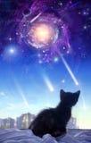 Um gatinho em um indicador ilustração do vetor