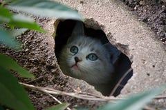Um gatinho está olhando-o Fotografia de Stock