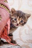 Um gatinho listrado pequeno olha de seu esconderijo Um gatinho é jogo imagens de stock