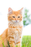 Um gatinho macio olha importante! Foto de Stock