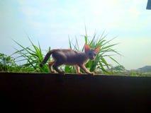 Um gatinho no brilho fotografia de stock