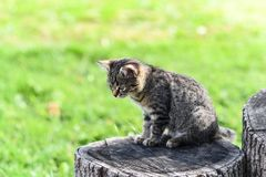 Um gatinho pequeno do gato malhado senta-se em um cânhamo do carvalho no meio da jarda, interessante e focalizado Foto de Stock Royalty Free