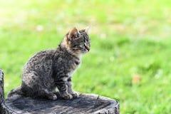 Um gatinho pequeno do gato malhado senta-se em um cânhamo do carvalho no meio da jarda, interessante e focalizado Imagens de Stock