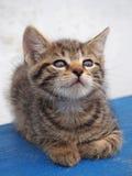 Um gatinho pequeno olha acima Fotos de Stock