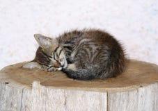 Um gatinho pequeno tão sonolento em meu pelotão no la Palma fotos de stock royalty free