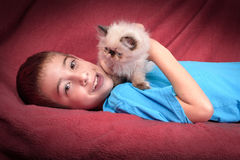 Um gatinho persa Himalaia novo do ponto azul Imagens de Stock Royalty Free