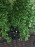 Um gatinho preto surpreendente imagem de stock royalty free