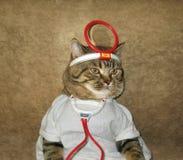 Um gato é um doutor fotos de stock