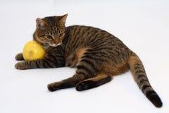 Um gato Foto de Stock