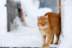 Um gato Fotos de Stock Royalty Free