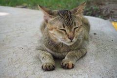 Um gato imagens de stock