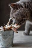 Um gato aspira peixes crus Imagens de Stock
