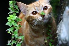 Um gato bonito marrom Imagem de Stock