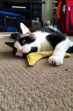 Um gato cansado e feliz Imagem de Stock Royalty Free