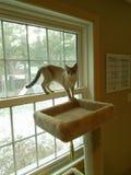 Um gato cinzento em uma janela Foto de Stock