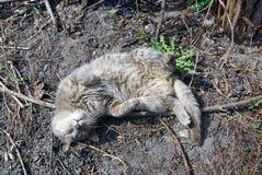 Um gato cinzento encontra-se na terra Foto de Stock