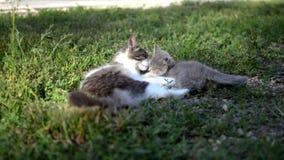 Um gato com um gatinho filme