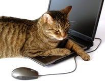Um gato com um portátil Fotografia de Stock