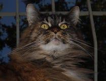 Um gato da concha de tartaruga senta-se em uma janela contra o céu e uma árvore fotografia de stock royalty free