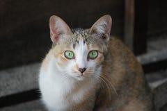 Um gato da dúvida Imagens de Stock