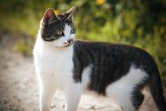 Um gato da jarda girou ao redor, estando em uma estrada secundária foto de stock