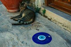 Um gato da rua em Turquia que encontra-se perto do sinal da região de Turquia Fotografia de Stock