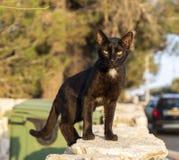 Um gato de aleia fotografia de stock royalty free