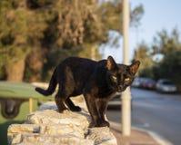 Um gato de aleia fotos de stock