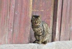 Um gato de casa fotografia de stock