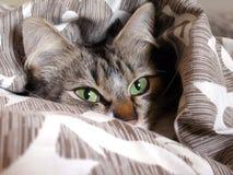 Um gato de gato malhado que dorme na cama em um descanso Fotografia de Stock