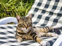 Um gato de olhos verdes bonito Fotografia de Stock Royalty Free
