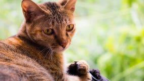 Um gato de vista perverso Imagens de Stock Royalty Free