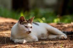 Um gato disperso Foto de Stock