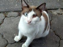 Um gato disperso do olho que procura algum alimento fotografia de stock