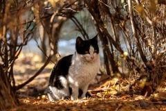 Um gato disperso juvenil Imagem de Stock Royalty Free