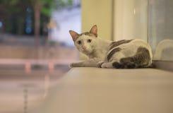 Um gato disperso na cena da noite foto de stock royalty free