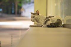Um gato disperso na cena da noite Imagens de Stock
