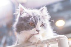 Um gato do bichano na parte superior Imagem de Stock