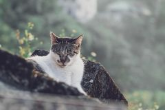 Um gato do sono imagem de stock