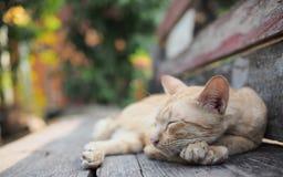 Um gato do sono Imagens de Stock Royalty Free