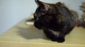 Um gato doméstico manchado obscuridade senta-se ao lado de uma pilha de livros na tabela video estoque