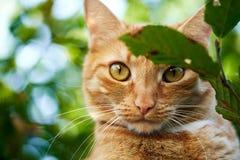 Um gato doméstico no jardim imagens de stock