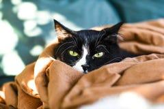 Um gato doméstico que descansa em uma cobertura fotografia de stock