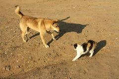 Um gato e um cão Imagens de Stock Royalty Free