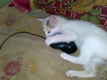 Um gato e um rato Imagens de Stock Royalty Free