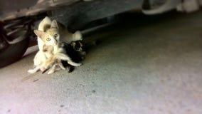um gato e uma vaquinha Fotografia de Stock