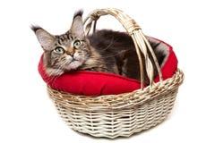 , um gato em uma cesta Fotos de Stock Royalty Free