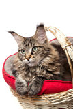 , um gato em uma cesta Imagem de Stock