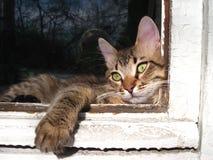 Um gato está em um indicador imagens de stock