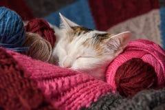 Um gato está em uma manta Foto de Stock Royalty Free